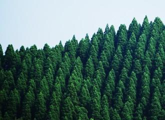 nature_top